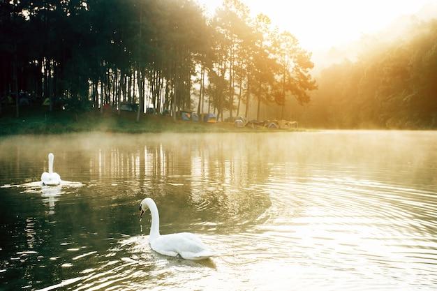 白い白鳥のいる湖 Premium写真