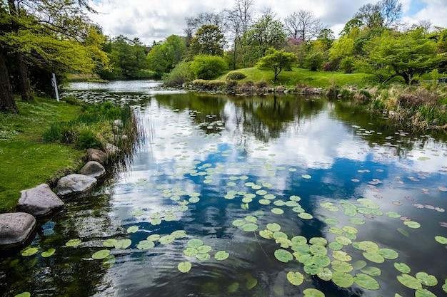 Lago con il riflesso delle nuvole in un parco circondato da molti alberi verdi Foto Gratuite