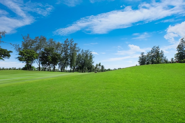Land scape wide green lawns Premium Photo