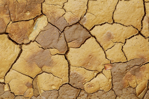 Land with dry and cracked ground. Premium Photo
