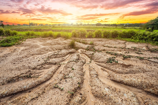 Land with dry soil or cracked ground texture and grass on orange sky background Premium Photo