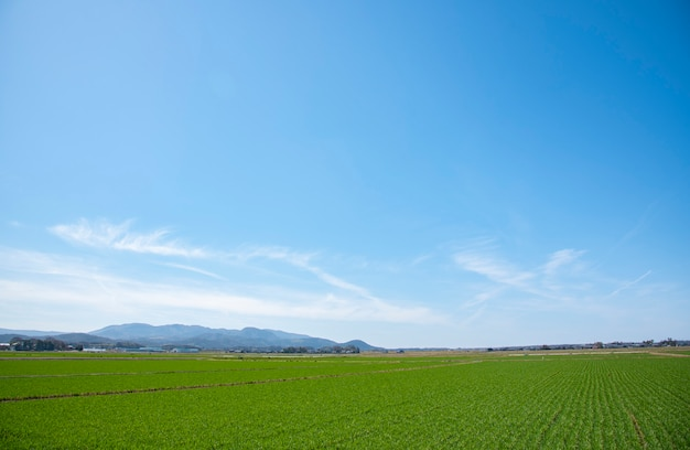 Landscape background for summer ,blue sky and beautiful cloud Premium Photo