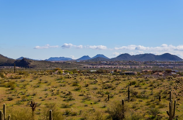 Landscape of the cactus and mountains city of panorama phoenix, arizona Premium Photo