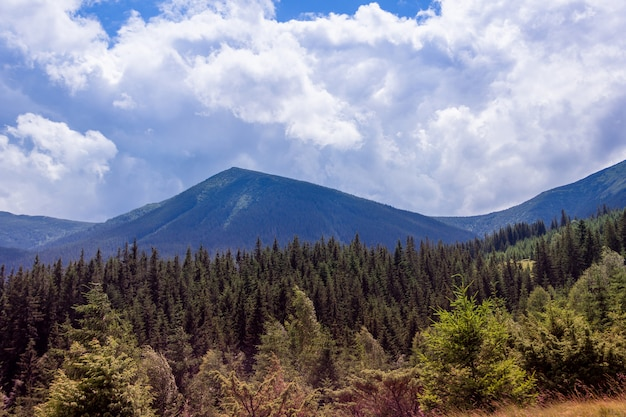 Landscape of a carpathians mountains with firtrees and sky Premium Photo