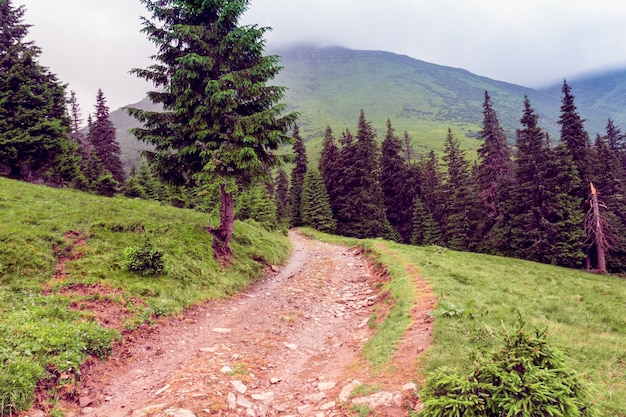 Landscape of a carpathians mountains with footpath Premium Photo