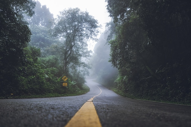 Landscape of dense fog on the roads and road signs in the forest in winter. Premium Photo