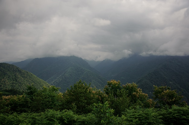 Landscape of the dense woods in mountains Premium Photo