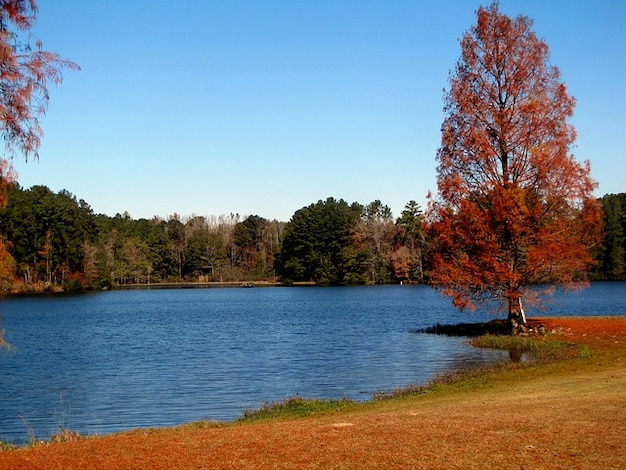 Landscape With Water And Trees landscape fall water nature lake trees ...