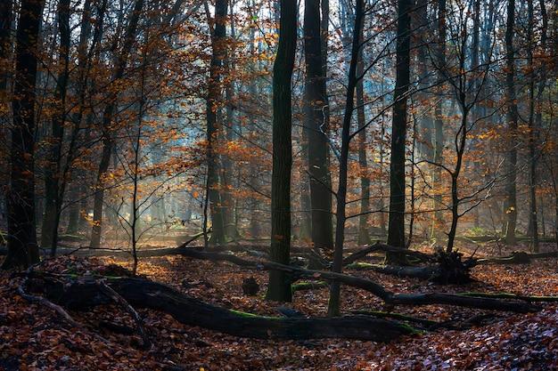 Paesaggio di una foresta ricoperta di foglie secche e alberi sotto la luce del sole in autunno Foto Gratuite