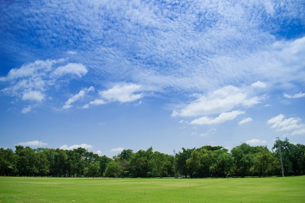 Landscape of grass and beautiful sky. Premium Photo