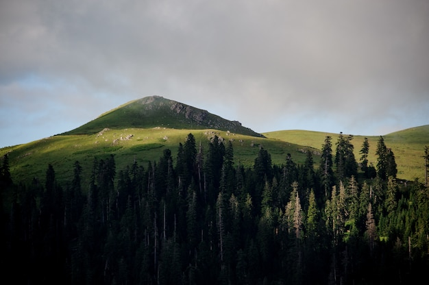 Landscape of the hill covered with green gras in the foreground of evergreen forest Premium Photo