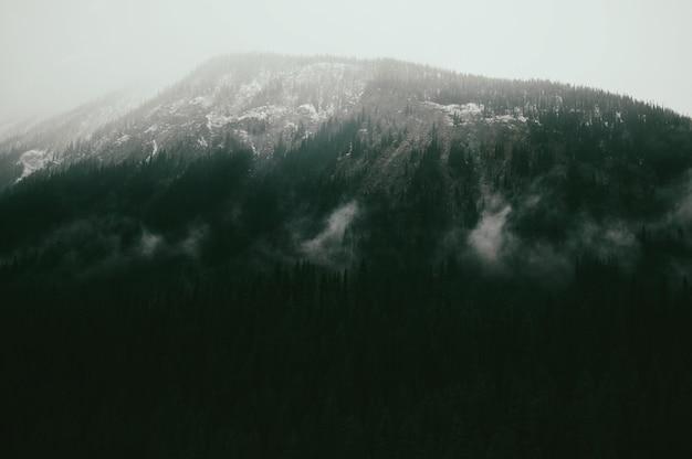 Paesaggio di montagne coperte di foreste sotto la luce del sole Foto Gratuite