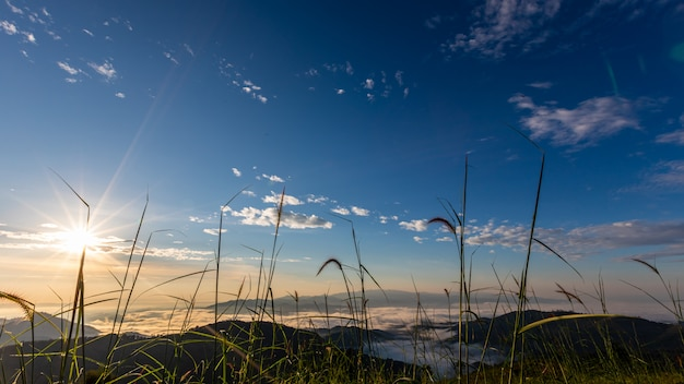 Landscape nature view at morning on the mountain fog chiang rai thailand Premium Photo