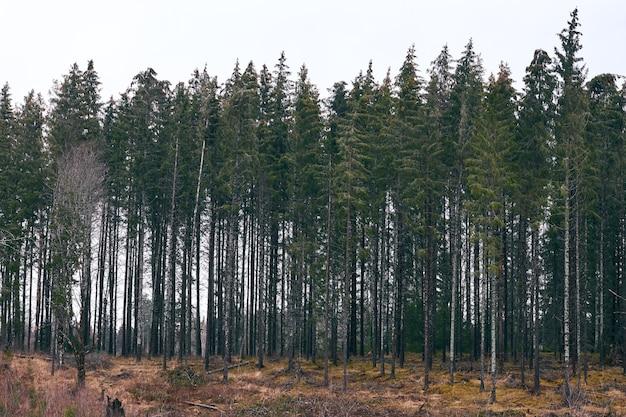 昼間の曇り空の下で緑に覆われた森の風景 無料写真