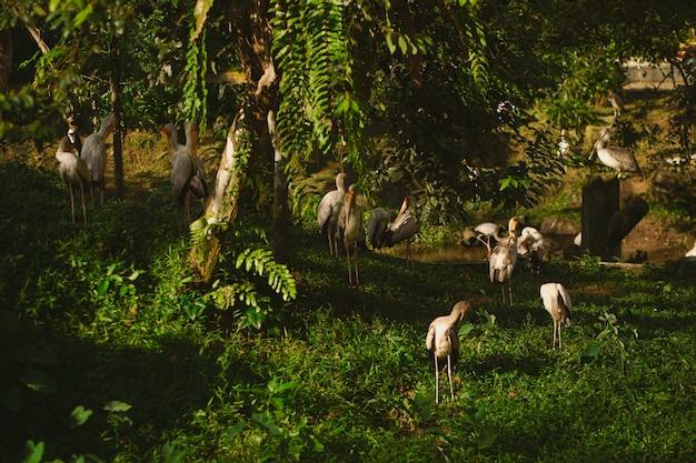 日光の下で地面に立っているペリカンと緑に覆われた森の風景 無料写真