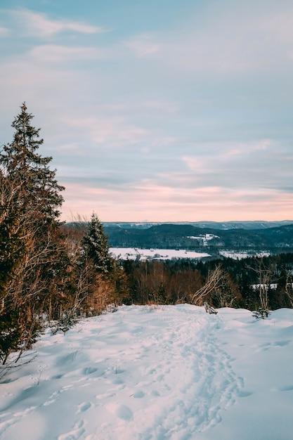 日没時に曇り空の下で雪に覆われた森の風景 無料写真
