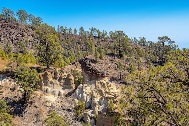テネリフェ島のテイデ山の森をトレッキングする風景 Premium写真