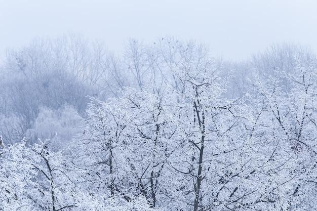 クロアチアのザグレブで冬の間に霜で覆われた木の枝の風景 無料写真