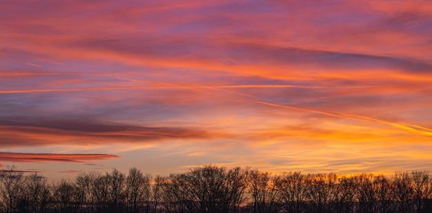 美しいピンクの夕日の中に曇り空の下で木のシルエットの風景 無料写真