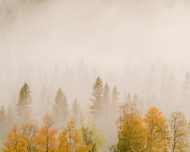 霧に覆われた森の中の色とりどりの葉を持つ木の風景 無料写真