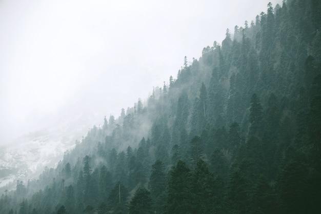 冬の森の風景パノラマビュー 無料写真