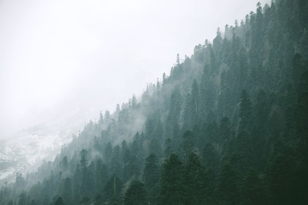 Vista panoramica del paesaggio sulla foresta invernale Foto Gratuite