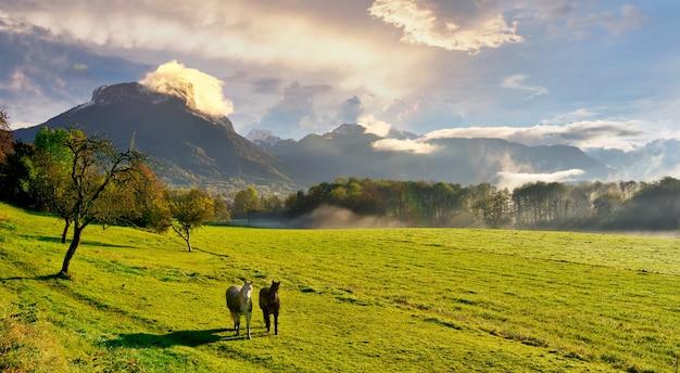 Пейзажное фото лошадей на зеленом лугу с горами и облаками вдалеке Premium Фотографии