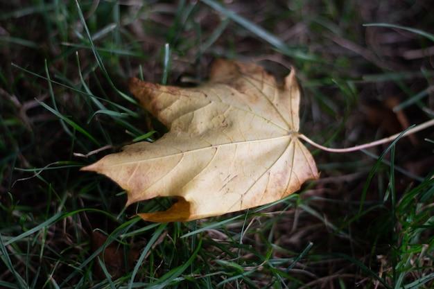 Colpo di paesaggio di una foglia marrone in un terreno di erba verde Foto Gratuite