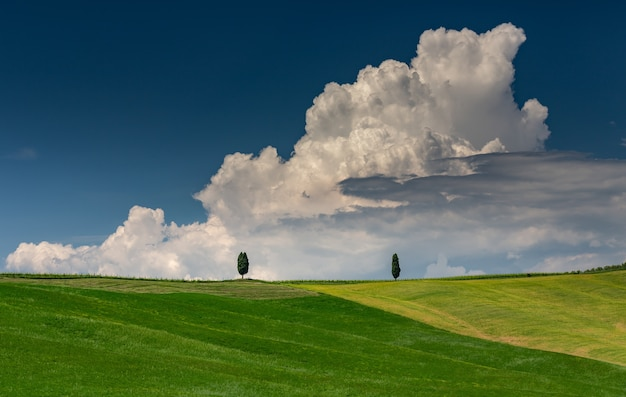 Landscape shot of a green hill with two green trees in val d'orcia tuscany italy Free Photo