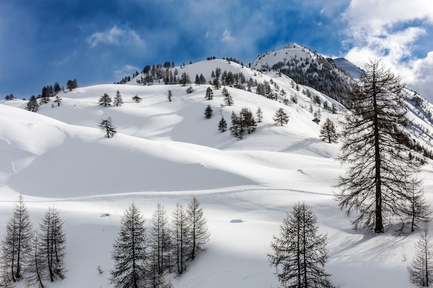 Landscape shot of the hills in piedmont italy Free Photo