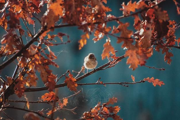 Colpo di paesaggio di un uccello usignolo Foto Gratuite