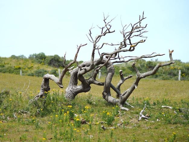 Пейзажный снимок мертвого дерева с ясным голубым небом Бесплатные Фотографии