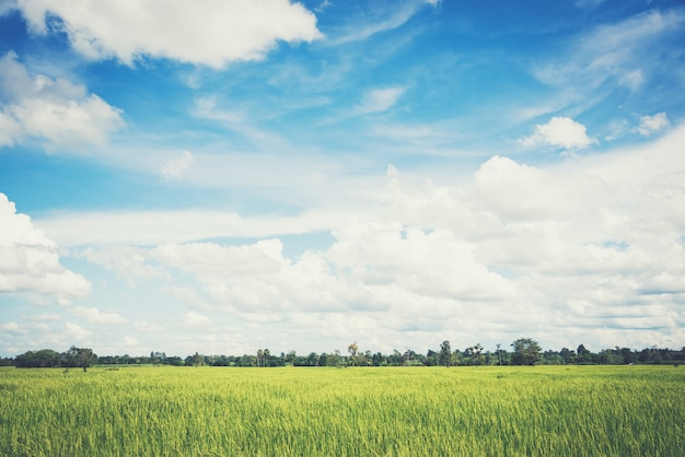 Landscape of sky with rice fields, soft pastel vintage style Premium Photo