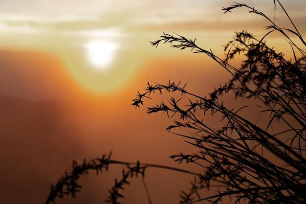 Пейзаж. высокая трава в солнечном свете. вулкан батур. бали индонезия Бесплатные Фотографии