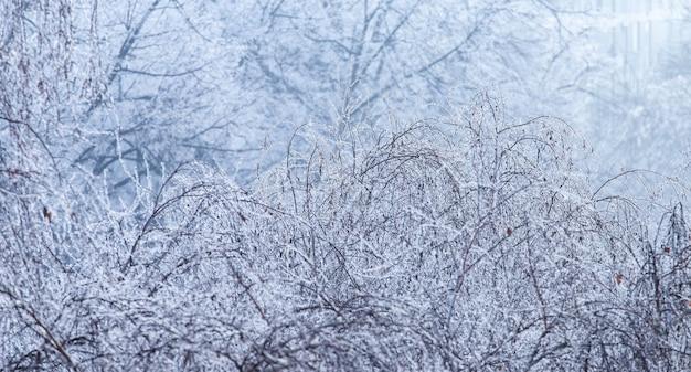 Paesaggio di rami di alberi coperti di brina durante l'inverno a zagabria in croazia Foto Gratuite