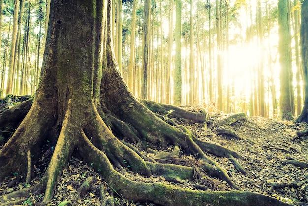 풍경 빈티지 풍경 녹색 아름다움 무료 사진