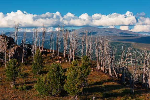 Пейзаж с мертвым лесом на перевале высотой более 2000 метров в горах на алтае Premium Фотографии