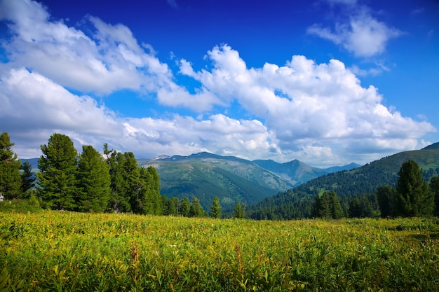 Landscape with forest mountains Free Photo