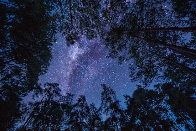 나무 위에 은하계와 풍경. 별 밤 하늘. 긴 노출 사진. 프리미엄 사진