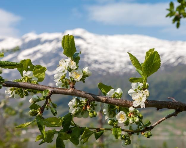 山のある風景します。ノルウェーのフィヨルド 無料写真