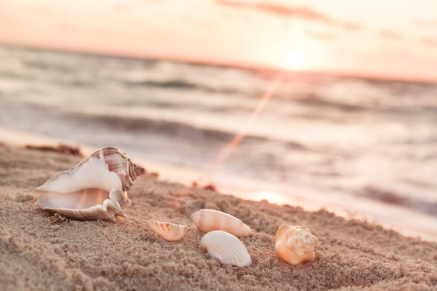 Landscape with shells on tropical beach at sunrise Premium Photo