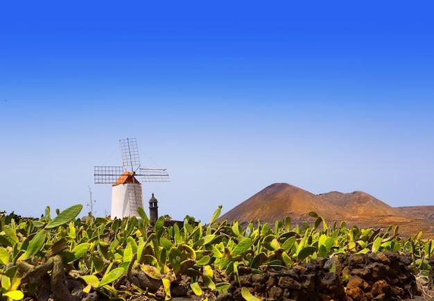 Lanzarote guatiza cactus garden windmill Premium Photo