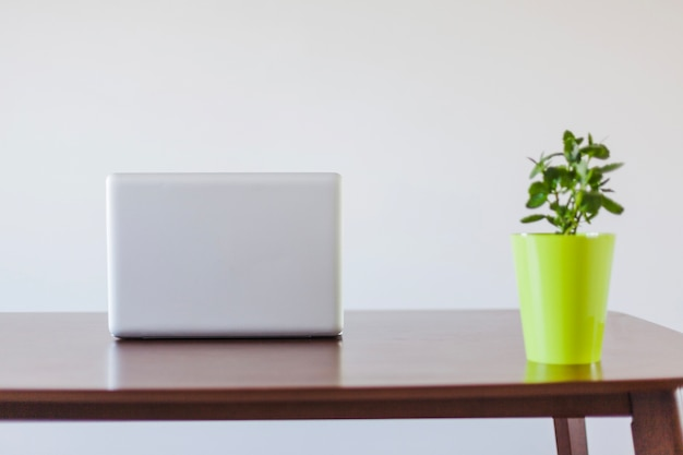 Laptop and plant in pot on table Free Photo