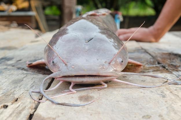 Large catfish on wooden table Premium Photo