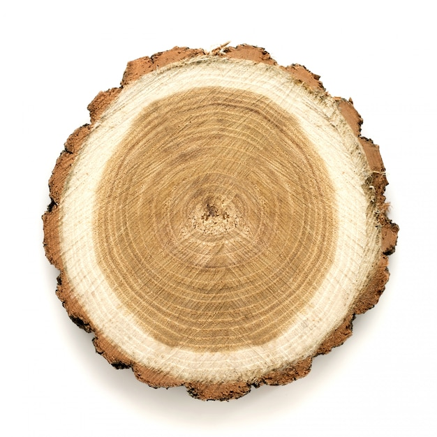 Large circular piece of wood cross section with tree ring texture pattern and cracks Premium Photo