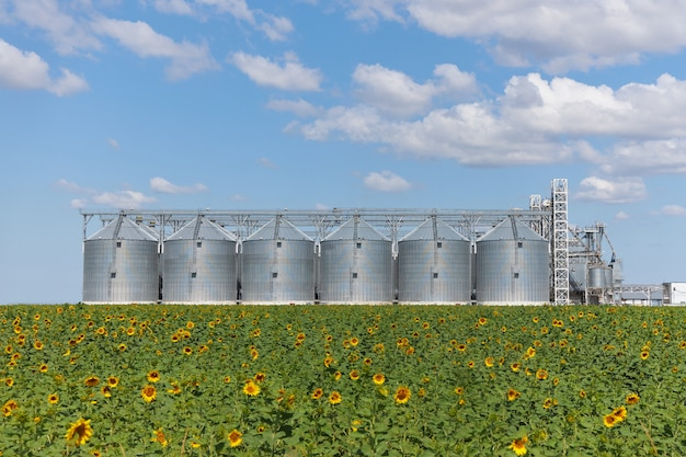 Large modern wheat elevator, granary and field with sunflower Premium Photo
