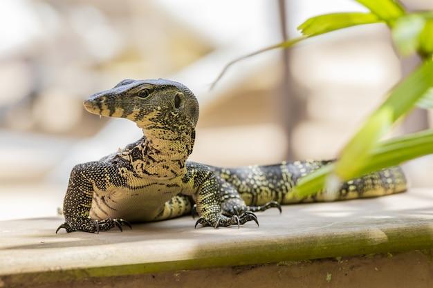 Крупная рептилия крупным планом Бесплатные Фотографии