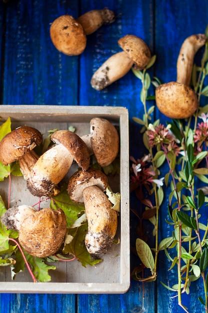Large white forest mushrooms. autumn harvest. vintage photo. Premium Photo