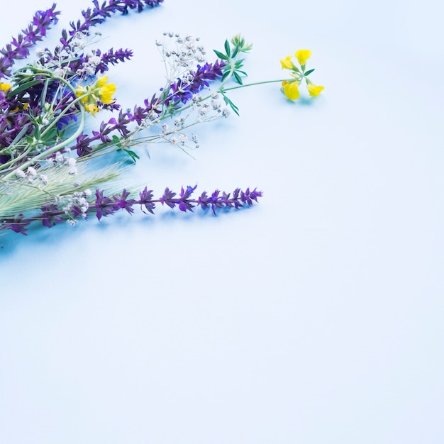 Lavender flowers on the blue background Free Photo