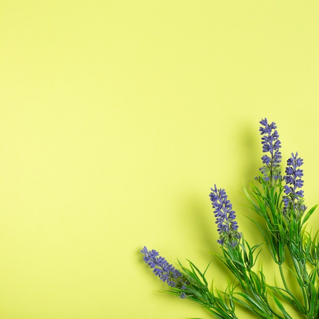 Lavender flowers on green background with copy space Free Photo